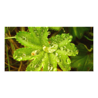 Small Green Plant Photo Greeting Card