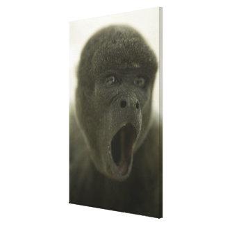 Small grey monkey, outdoors, portrait canvas print