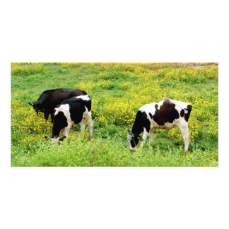 Small herd of bulls personalized photo card