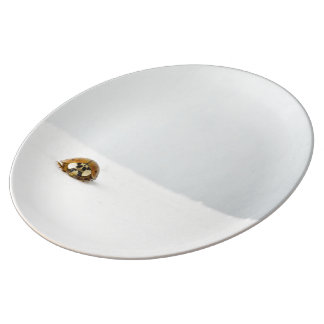 small insect on white surface plate