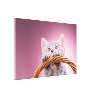Small kitten stretched canvas prints