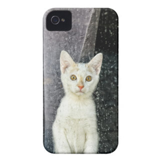 Small kitten in the window Case-Mate iPhone 4 case