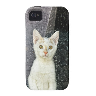 Small kitten in the window iPhone 4/4S covers