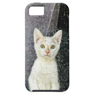 Small kitten in the window iPhone 5 cover