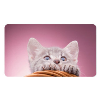 Small kitten pack of standard business cards