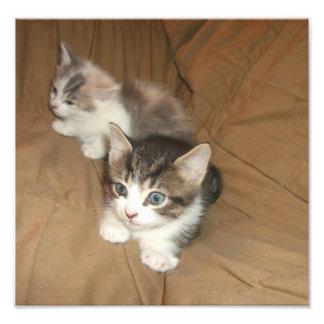 Small Kittens Art Photo