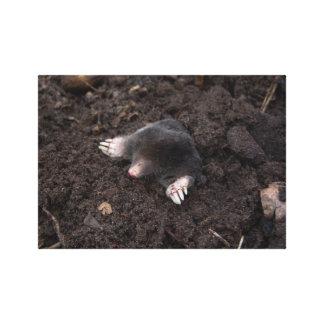 Small mole gallery wrap canvas
