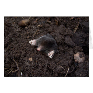 Small mole card