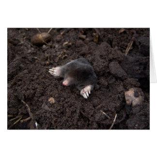 Small mole greeting card