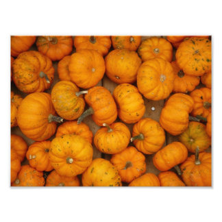 Small Pumpkins Photographic Print