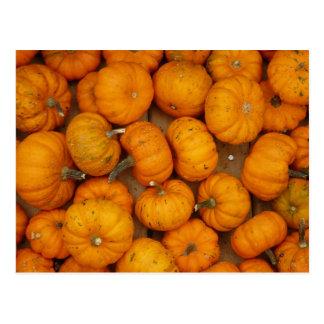 Small Pumpkins Postcard