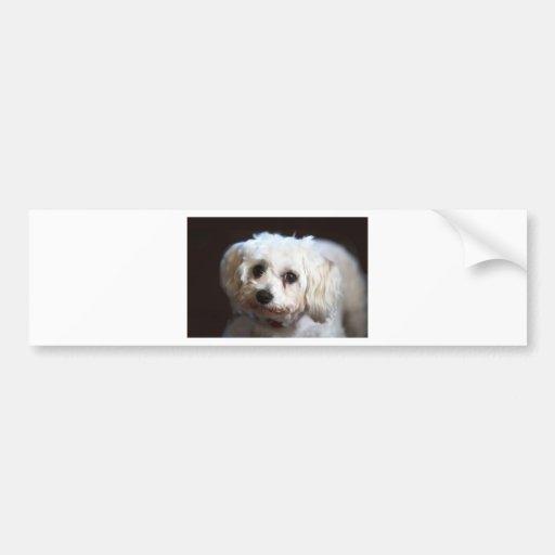 Small sweet dog bumper sticker
