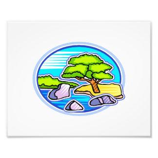 small tree by water bonsai like design photo print