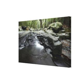 Small Waterfall Queensland Australia Canvas Print