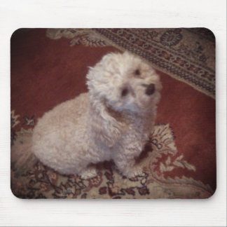 small white dog on oriental carpet mousepads