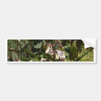 Small White Flower Bumper Stickers