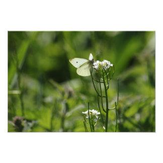 Small White In Scottish Meadow Photo Print