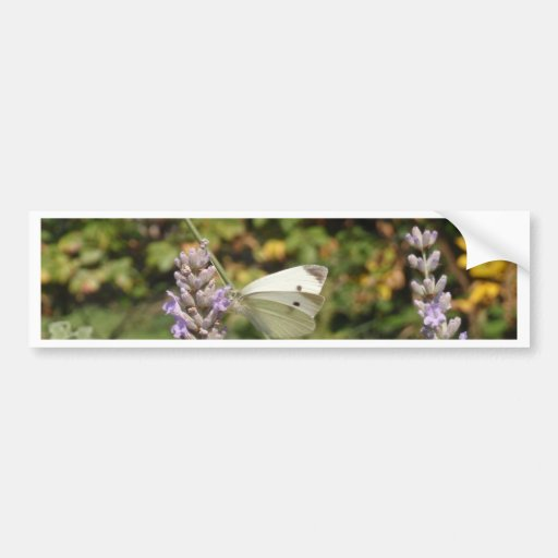 Small White Or Cabbage White Butterfly Bumper Stickers