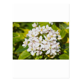 Small white wild flowers postcard