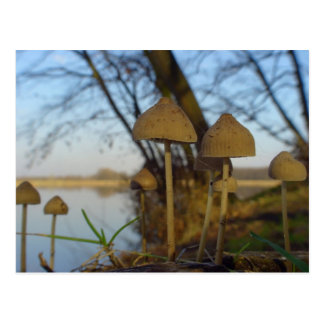 Small world - mushroom close up at lake postcard