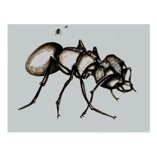 'Small World' Warrior Ant Postcard