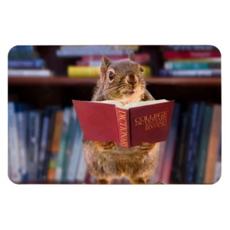 Smart Squirrel Reading a Dictionary Magnets