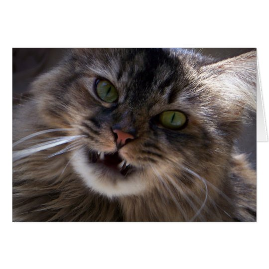 Smile, Maine Coon Greeting Card (blank)