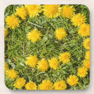 smile with dandelion on grass beverage coasters
