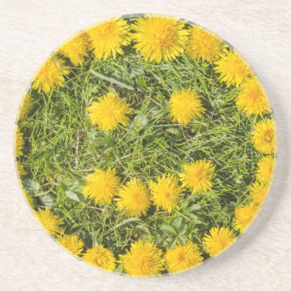 smile with dandelion on grass coaster