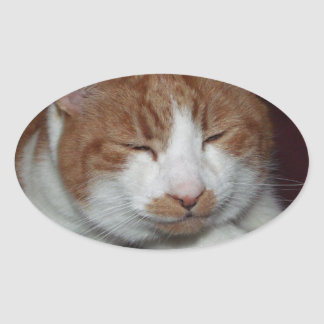 Smiley cat oval sticker