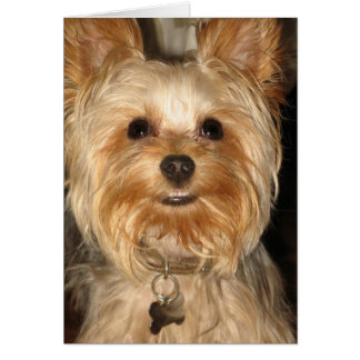 smiley yorkie card