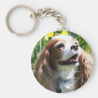 Smiling Blenheim Cavalier King Charles Spaniel Key Ring