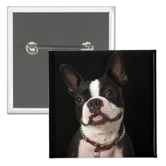 Smiling Boston terrier with collar 15 Cm Square Badge