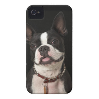 Smiling Boston terrier with collar iPhone 4 Cover