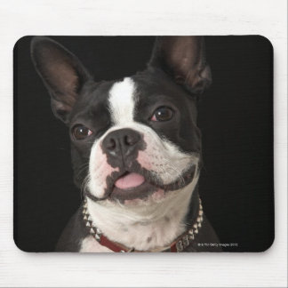 Smiling Boston terrier with collar Mouse Pad