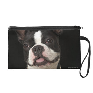 Smiling Boston terrier with collar Wristlet