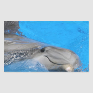 Smiling Bottlenose Dolphin Stickers