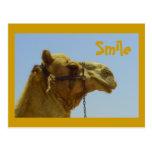 Smiling camel in profile