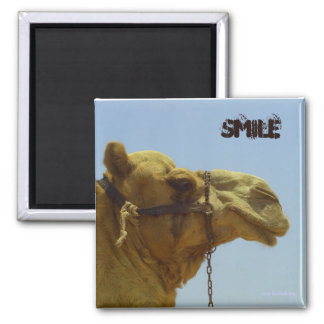 Smiling camel in profile  - camel in the desert square magnet