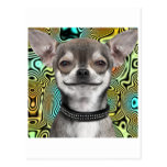 Smiling Chihuahua Dog Postcard