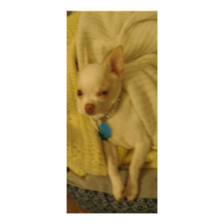Smiling Chihuahua Rack Card or Bookmark