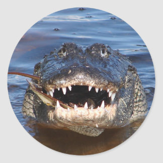 Smiling Crocodile Classic Round Sticker
