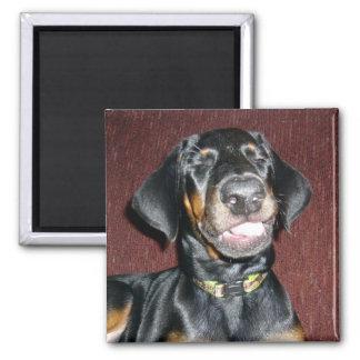 Smiling Doberman Pinscher Puppy Magnet