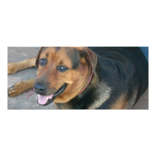 Smiling Dog Personalized Rack Card