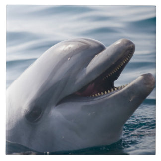 Smiling Dolphin Large Square Tile