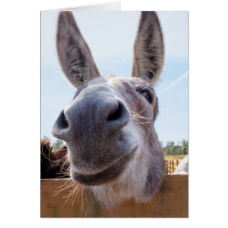 Smiling Donkey with Silly Grin Greeting Card