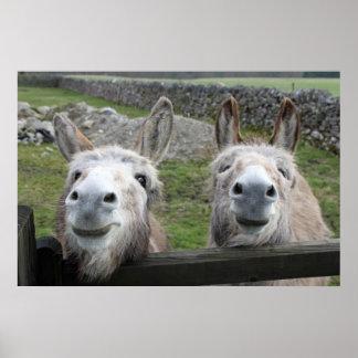 Smiling Donkeys Poster