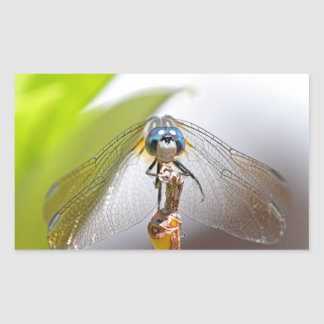 Smiling Dragonfly Macro Photo Rectangular Sticker