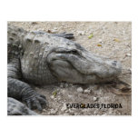 Smiling Gator Post Card