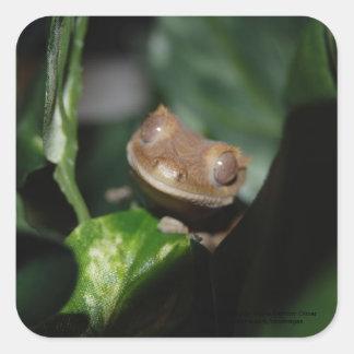 Smiling Gecko Square Sticker